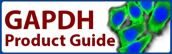 GAPDH antibody loading controls, antibodies, GAPDH matched pairs, GAPDH proteins